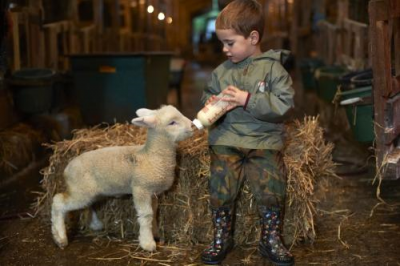 children feeding sheep2